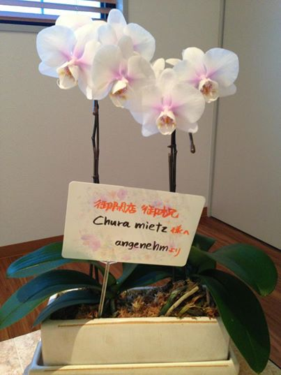 Chura mietzオープンのお祝い!